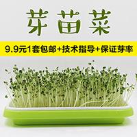 纸上种菜芽菜种子育苗盘套装